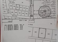ارض في بركاء فرصة ارضين شبك المساحة 1200 قريب المنازل