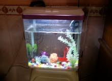 حوض أسماك متوسط الحجم