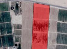 ارض للبيع وادي رم الديسه 45 دونم