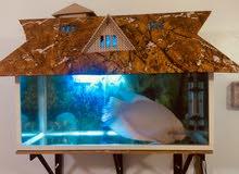 aquarium,external filter