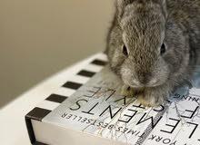 ارنب كيوت