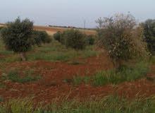 مزارع بدون بيوت --مزارع مع بيوت ريفيه -مزارع ممتازه مع برك سباحه وغير--مناطق لواء ذيبان في مادبا