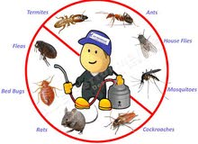 Pest Control And Cleaning Services مكافحة الآفات وخدمات التنظيف