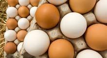 متوفر بيض دحي استرالي زهري لحية و اوداج