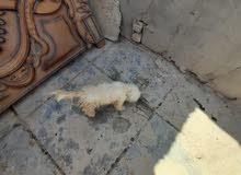 كلب ما اعرف نوعة شتريتة قبل فتره وما اعرفله