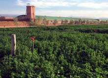 مزرعة للبيع مراكش