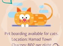 cat boarding services خدمات فندقة للقطط