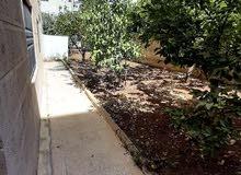 شقة فارغة للايجار خلف الهوليدي آن حديقة مشجرة 250دينار شهري