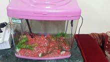 Fish tank..filter..for sail