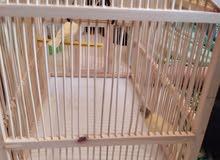 قفص طيور من الحطب للبيع