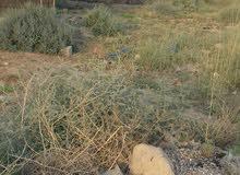 قطعة ارض للبيع في باب الهوى الجزيرة الثالثة قبل حسينية حجي عبد الزهرة الربح متوف