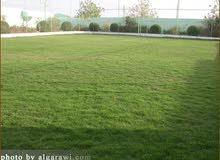ارض زراعي قطعتين 100 متر واجهة 5 ونزال 20 في حي ميسان للبيع