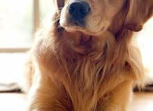 ابحث عن كلب للتبني I am looking for dog to adopt