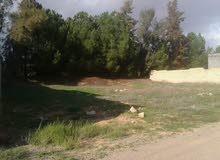 قطعة ارض 500 م للبيع في وادي الربيع بعد القوارب في الشارع متع الجامع الأخضر