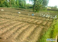 للبيع ارض زراعية مبانى 12 فدان ببنى سويف