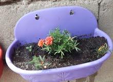 كافة الورود ونباتات الظل تم زراعتها والعناية بها خلال دورة حياتها