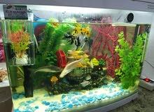 حوض سمك مع الاسماك