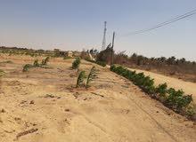 ارض 5 فدان مستصلحة و جاهزة للزراعة بمقدم 50 الف فقط