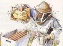 فحص وفرز خليات النحل