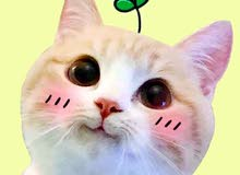 pllllz i want cat with cross eyes if you have plz call me