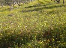 مزرعه للبيع في عجلون مساحتها 14 دونم