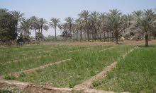 لراغبي الاستثمار الزراعي 35 فدان قابله للتجزئه كامله المرافق و الخدمات  بطريق مصر الفيوم