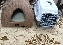 قطط لي البيع مع قفص و منزل