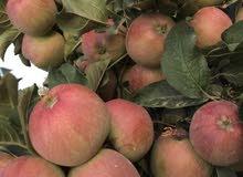 مزرعة في عمان للبيع ناعور العال و الروضة
