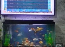 حوض سمك فاخر عرض متر طول نص متر