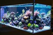 FISH TANK MAINTENANCE CLEANING SERVICES AVAILABLE