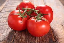 مطلوب مزرعة تبيع طماط