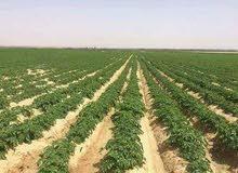 للبيع مزراعه 65 فدان