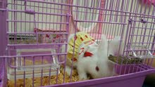 ارنب صغير ابيض