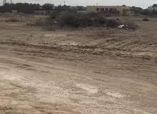 فرصه ممتازه ارض سكنية في ولاية بركاء منطقة السوادي شمال ع الشارع