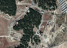 500م في ناعور سيل حسبان مشروع عبيده الكردي اطلاله خلابه بين الغابات والاحراش