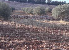 ارض في جرش النبي هود