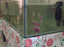 fish tank with 9 fishes for urgent sale 75 only for two days