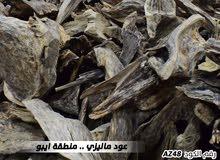 من أفخر أنواع العود (  ماليزي من منطقة ايبوة )