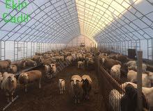 وصف خيمة Animal Net مقاس 13 × 70 لا تأخذه دون قراءة.