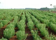 ارض زراعية شاملة المرافق لجميع الاستثمار