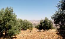 ارض للبيع في الاردن في محافظة جرش / دبين