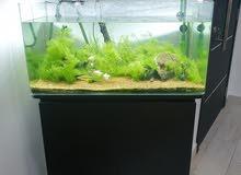 حوض أسماك زينة مع نبات طبيعي مقاس 80×40