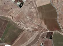10دونم و700م لببيع في بيت زرعه على منطقة فلل 35الف لدونم امكانية فرز خمس دونمات