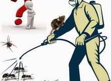 مكافحة الحشرات في جدة