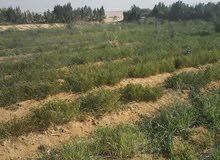 10 فدان للبيع باول الطريق الرئيسى ( رى نيلى مباشر) حيازة زراعية