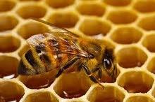 عسل سرول الجبل يفرن