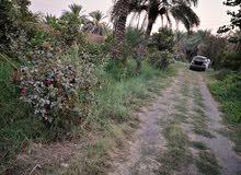 بيت سياحي يقع مباشرة على نهر دجلة مع بستان 3 دونم