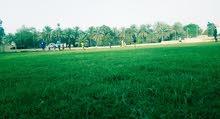 ملعب كرة قدم عشب طبيعي