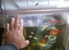 حوض سمك كامل