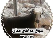 حساب انستجرام Oman.104